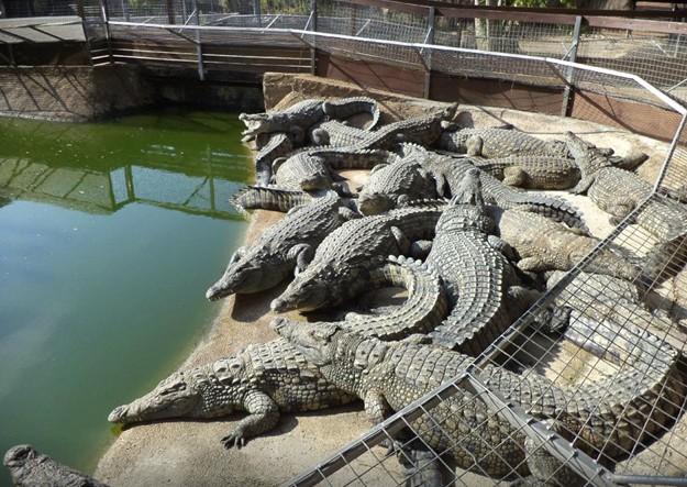 Parque de los Cocodrilos